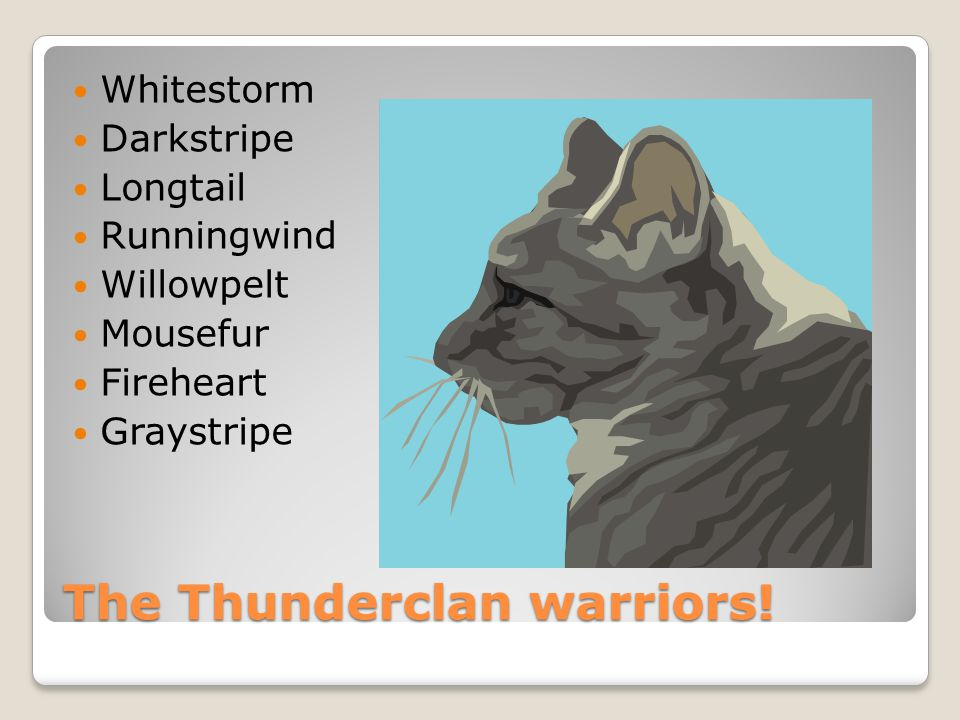 The Thunderclan elders and queens.