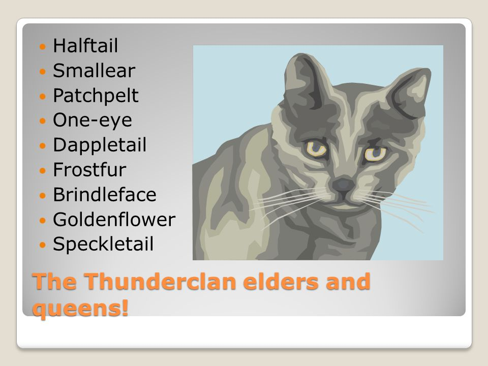 The Thunderclan apprentices and leader and deputy and medicine cat.