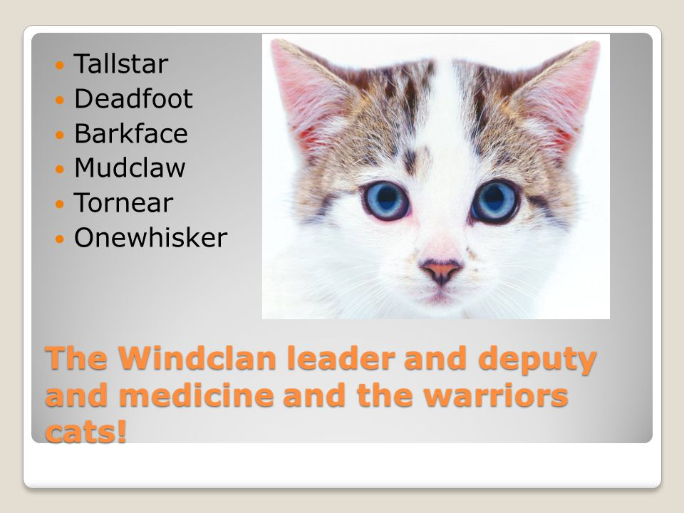 The Windclan apprentices and queens. Runningpaw Whitepaw Ashfoot Morningflower