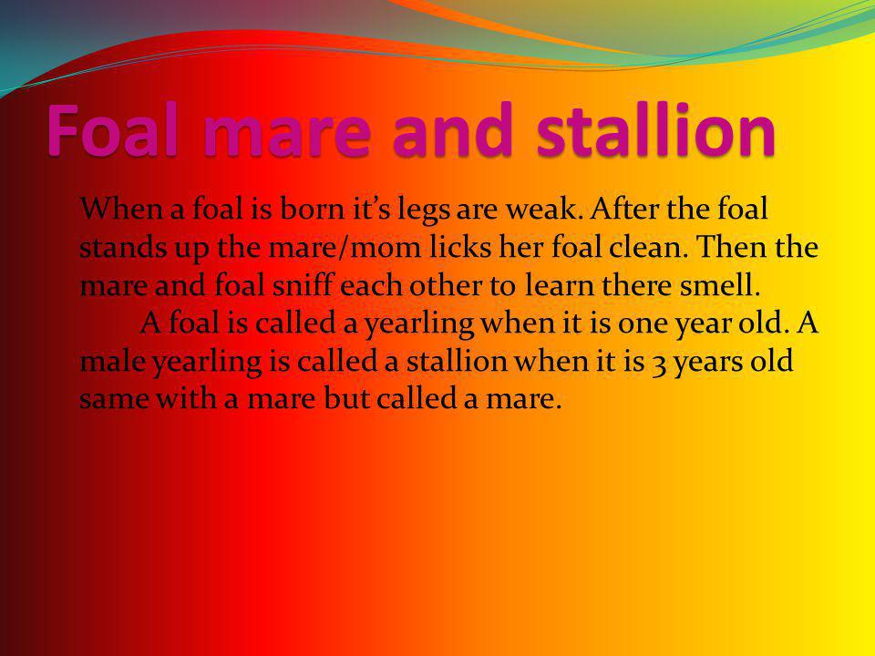 Foal mare and stallion When a foal is born it's legs are weak.