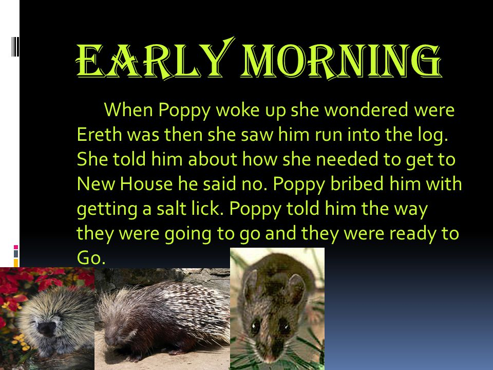 Early Morning When Poppy woke up she wondered were Ereth was then she saw him run into the log.