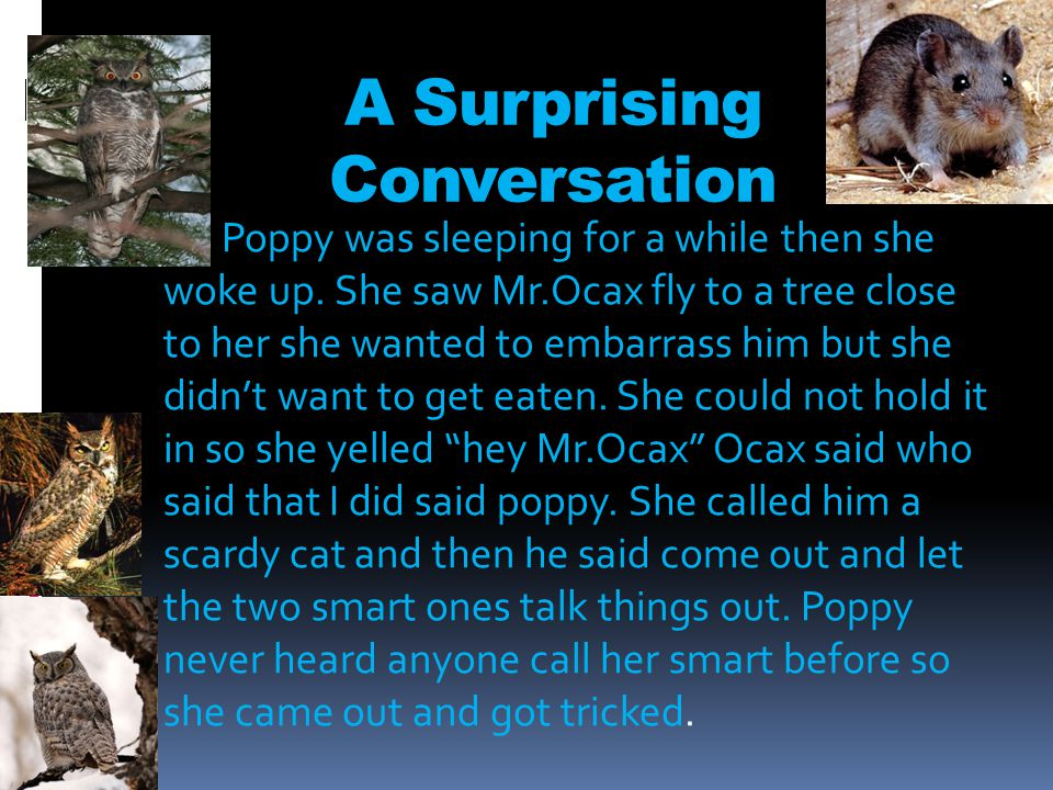A Surprising Conversation Poppy was sleeping for a while then she woke up.
