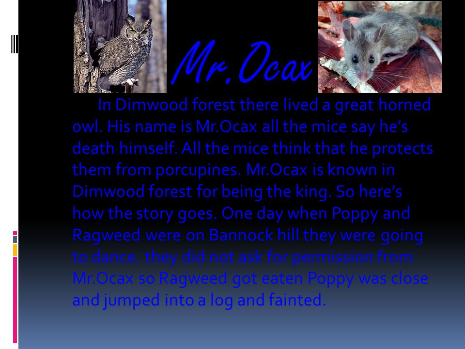 Mr.Ocax In Dimwood forest there lived a great horned owl.