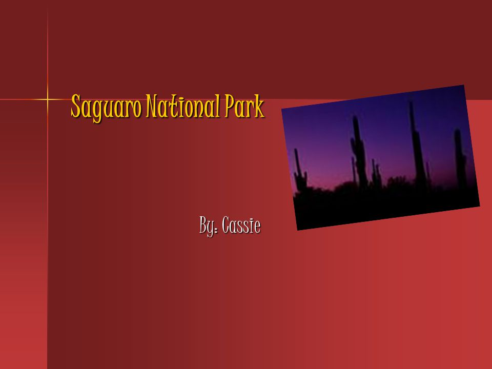 Saguaro National Park By: Cassie