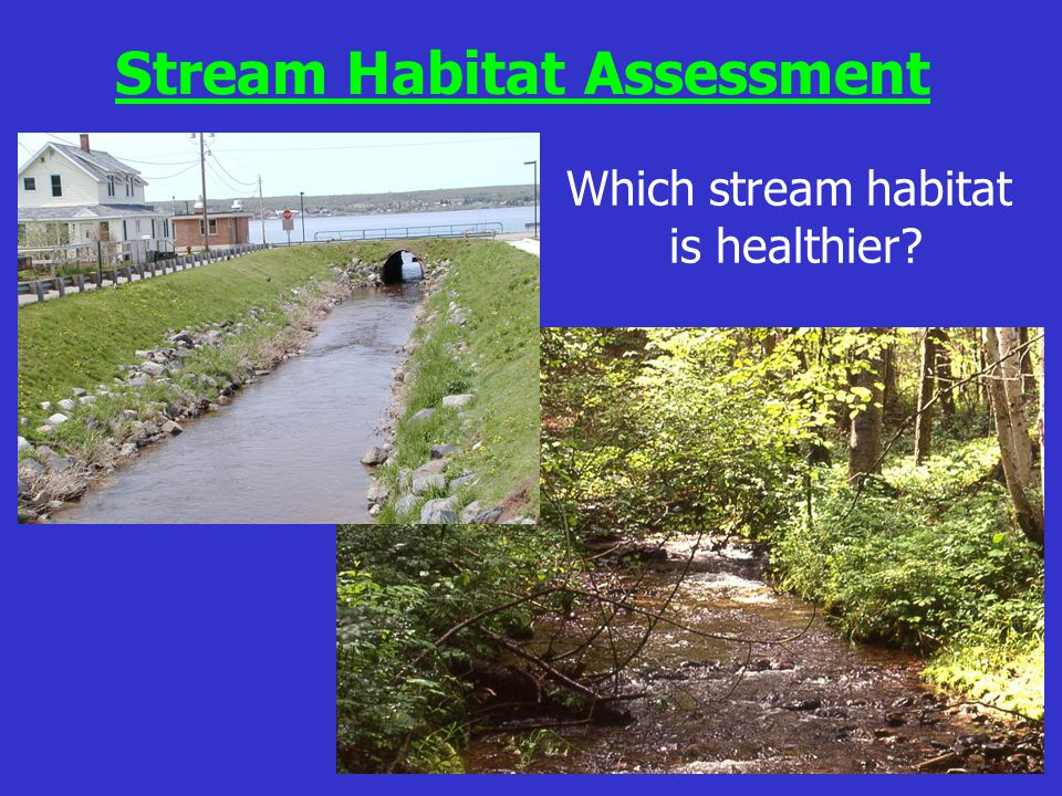 Which stream habitat is healthier? Stream Habitat Assessment