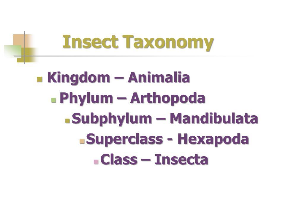 Insect Taxonomy Kingdom – Animalia Kingdom – Animalia Phylum – Arthopoda Phylum – Arthopoda Subphylum – Mandibulata Subphylum – Mandibulata Superclass
