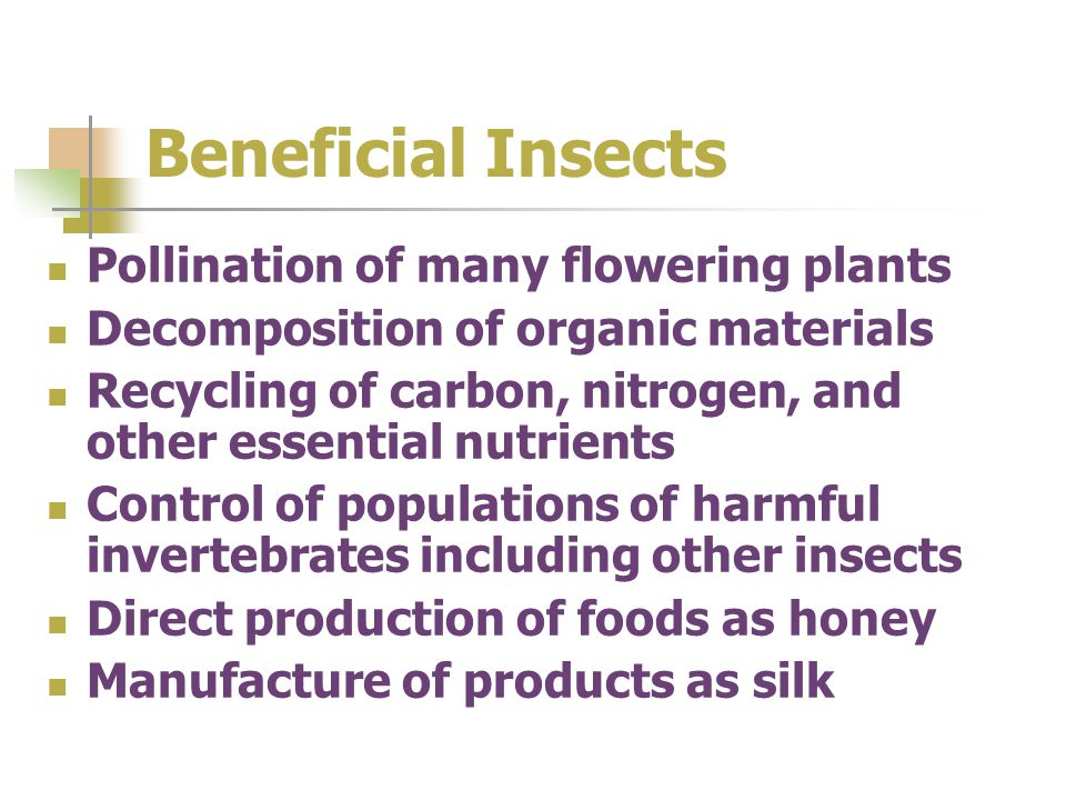 Beneficial Insects Pollination of many flowering plants Decomposition of organic materials Recycling of carbon, nitrogen, and other essential nutrient