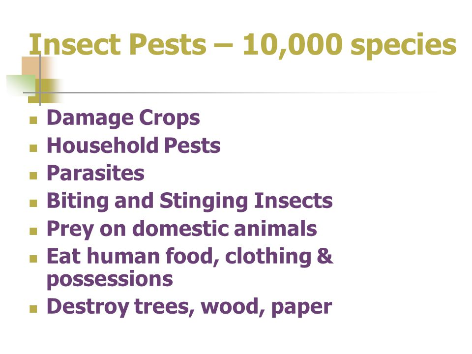 Insect Pests – 10,000 species Damage Crops Household Pests Parasites Biting and Stinging Insects Prey on domestic animals Eat human food, clothing & p