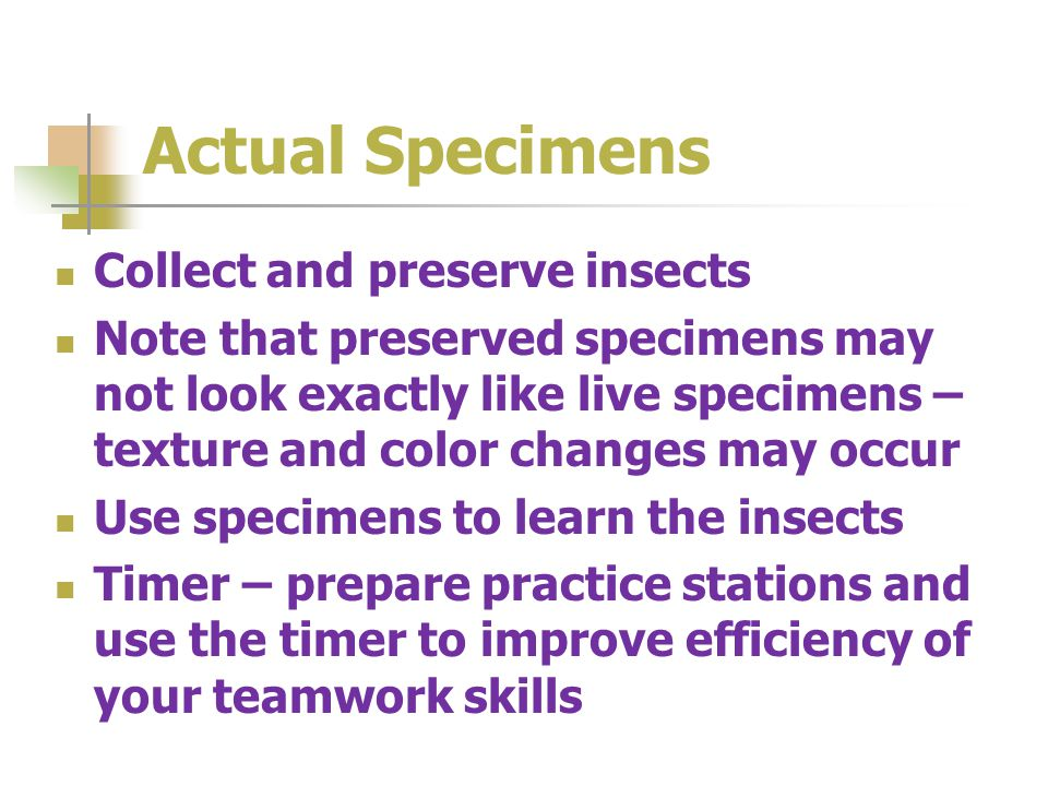 Actual Specimens Collect and preserve insects Note that preserved specimens may not look exactly like live specimens – texture and color changes may o