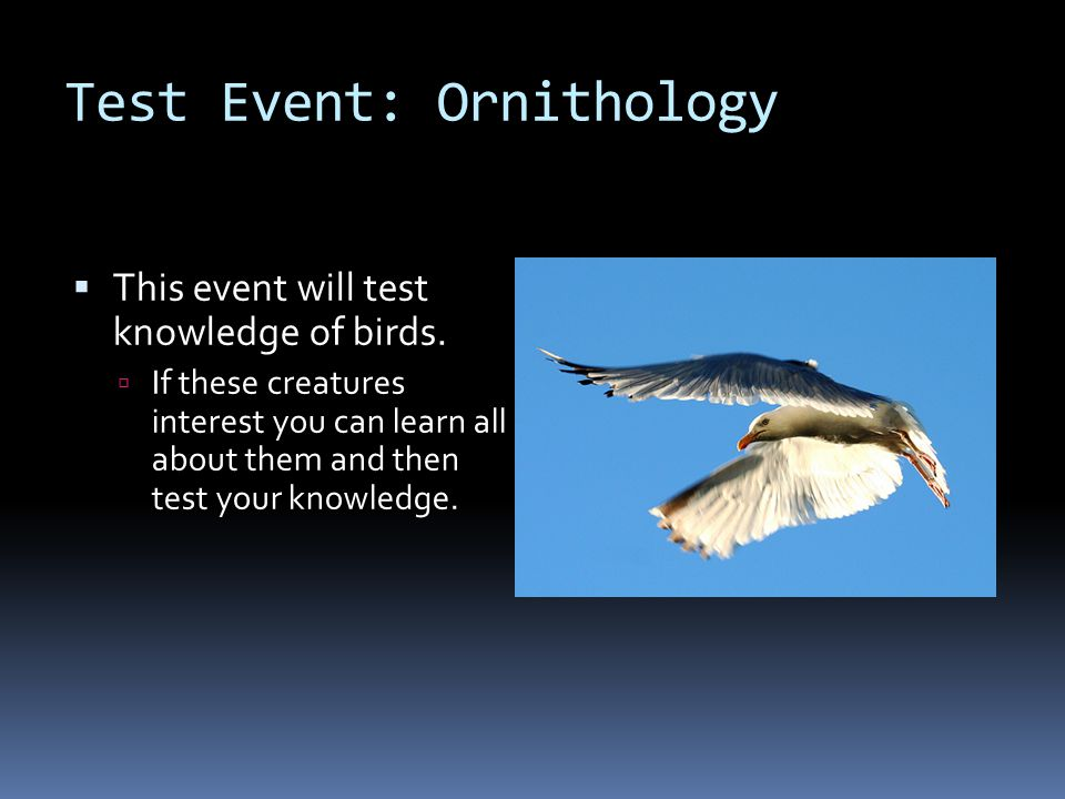 Test Event: Ornithology  This event will test knowledge of birds.  If these creatures interest you can learn all about them and then test your knowl