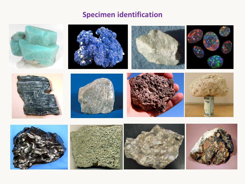 Specimen identification