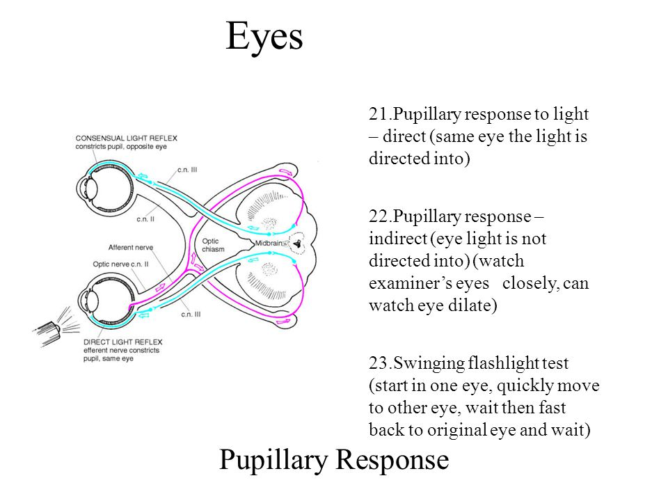 Eyes Pupillary Response 21.Pupillary response to light – direct (same eye the light is directed into) 22.Pupillary response – indirect (eye light is n