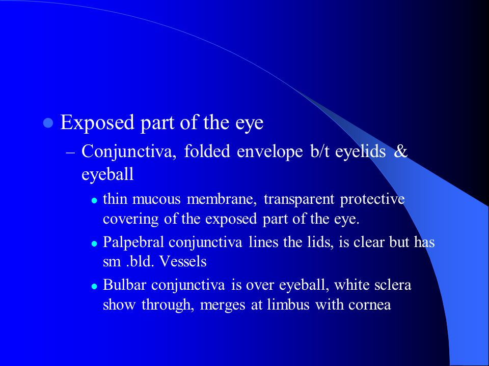 Within the upper eyelid – Tarsal plates, connective tissue gives upper lid shape – Meibomian glands, in the plates, lubricate the lids, stops overflow of tears, airtight seal when lids closed