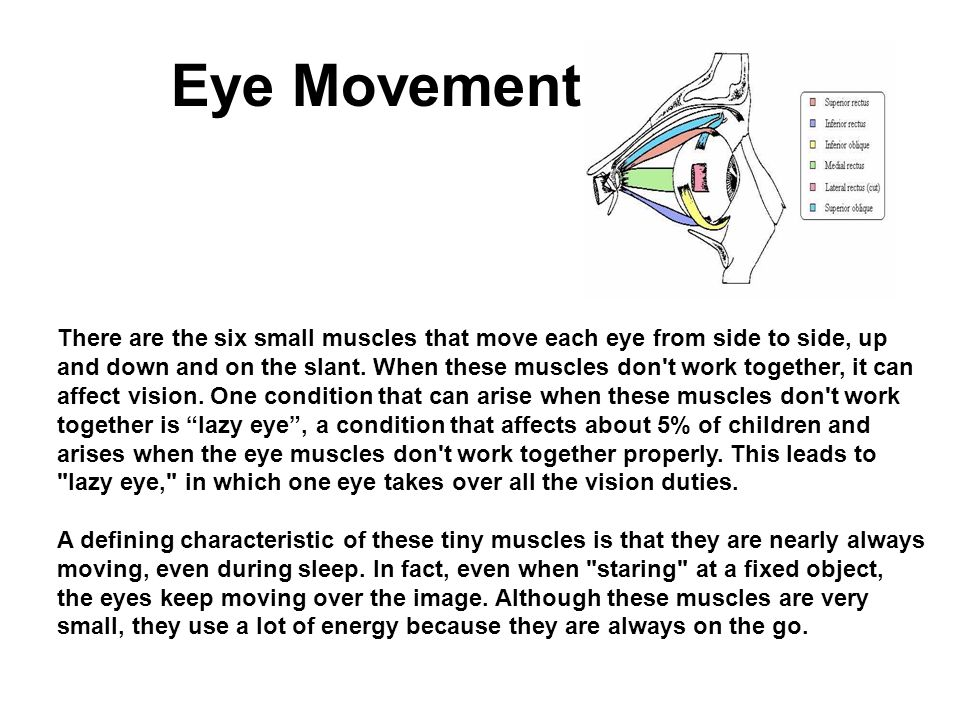 Eye Movement There are the six small muscles that move each eye from side to side, up and down and on the slant. When these muscles don't work togethe