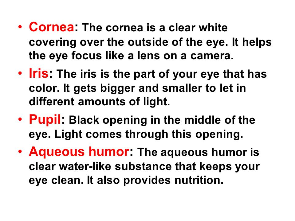 Cornea: The cornea is a clear white covering over the outside of the eye. It helps the eye focus like a lens on a camera. Iris: The iris is the part o