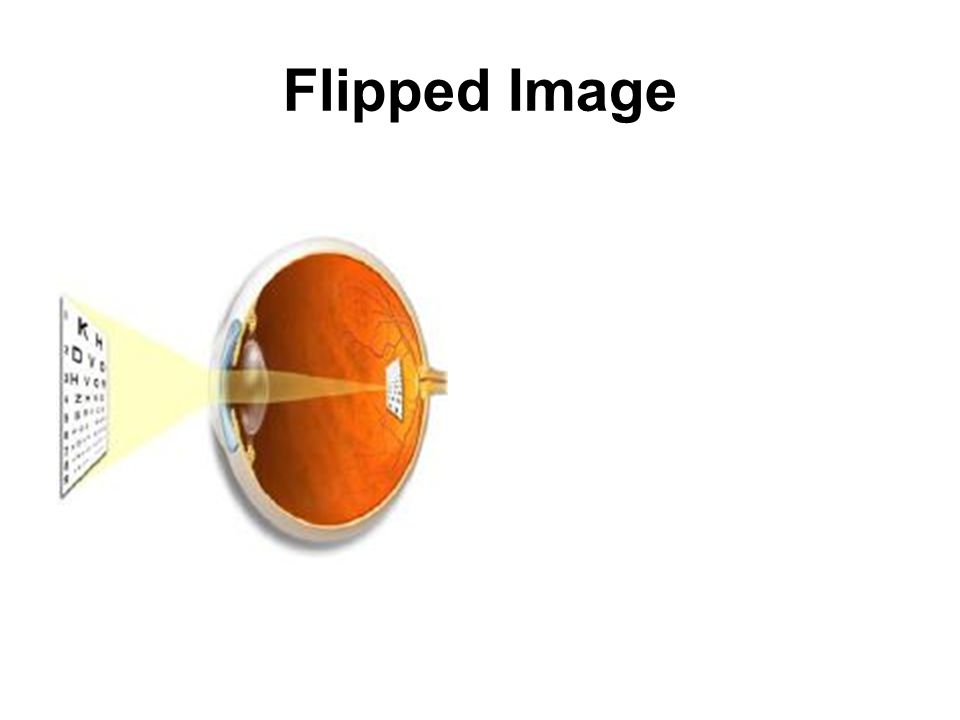 Eye Movement There are the six small muscles that move each eye from side to side, up and down and on the slant.