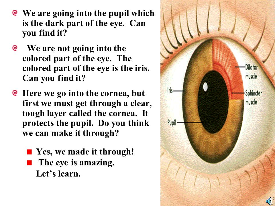 The Five Senses Verse 1 When you look and when you see, use your eyes.