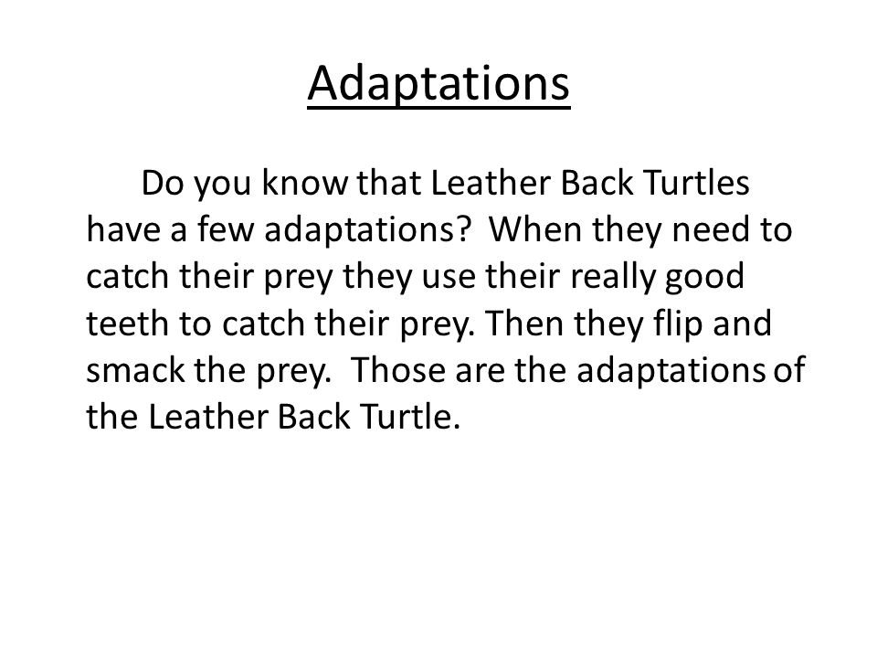 Food Did you know that Leather Back Turtles don't eat a lot of different food.