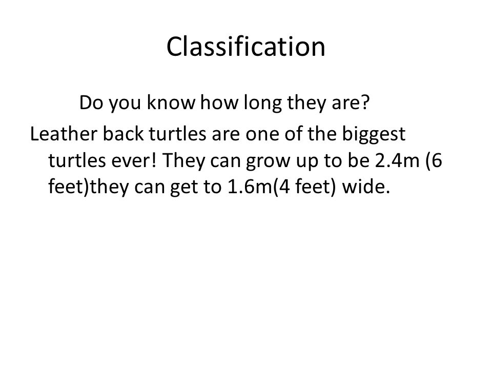 conclusion I hope you liked learning about them I think they are interesting