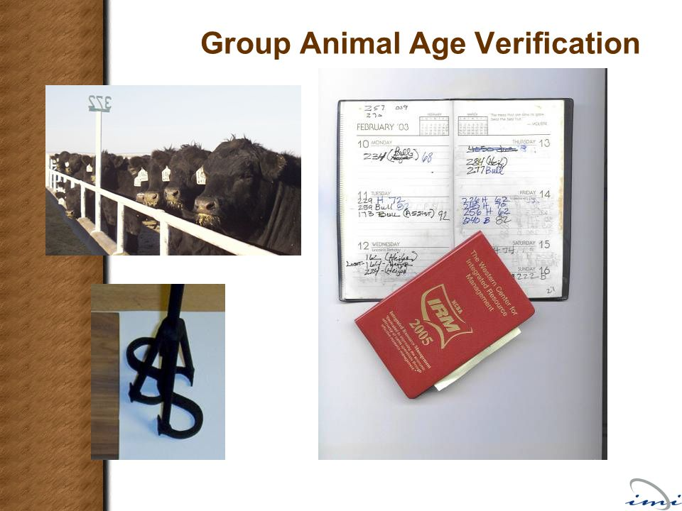 Group Animal Age Verification