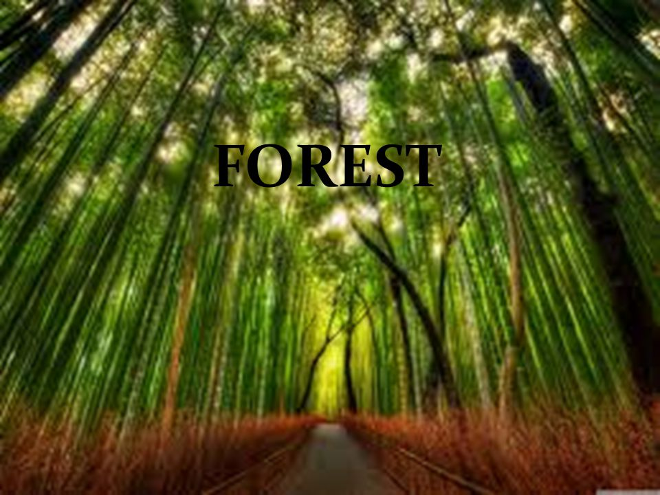 A Forest is a big area covered with various types of plants and trees.