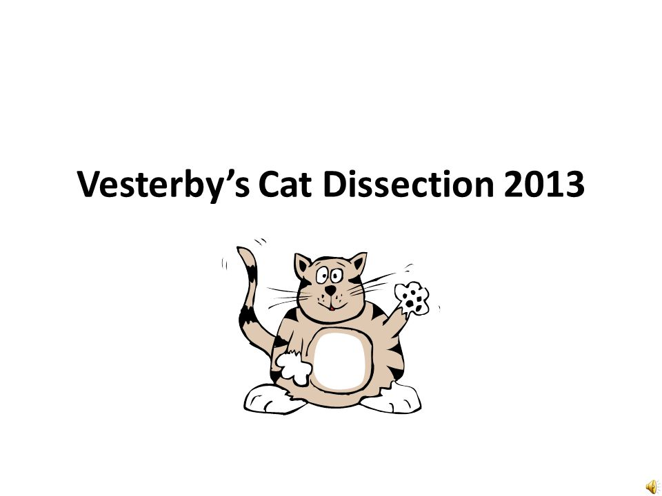 Vesterby's Cat Dissection 2013