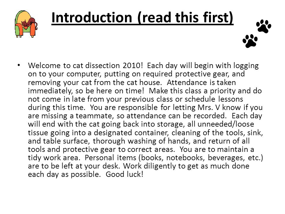 Introduction (read this first) Welcome to cat dissection 2010.