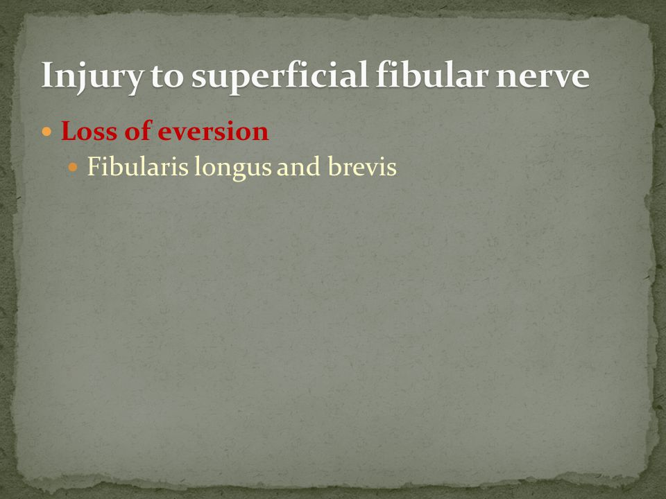 Loss of eversion Fibularis longus and brevis