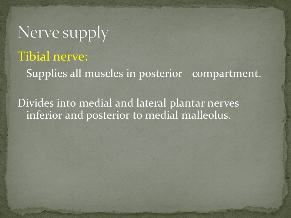 Tibial nerve: Supplies all muscles in posterior compartment.