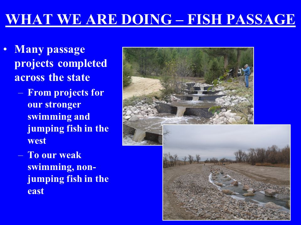 WHAT WE ARE DOING – FISH PASSAGE Many passage projects completed across the state –From projects for our stronger swimming and jumping fish in the west –To our weak swimming, non- jumping fish in the east