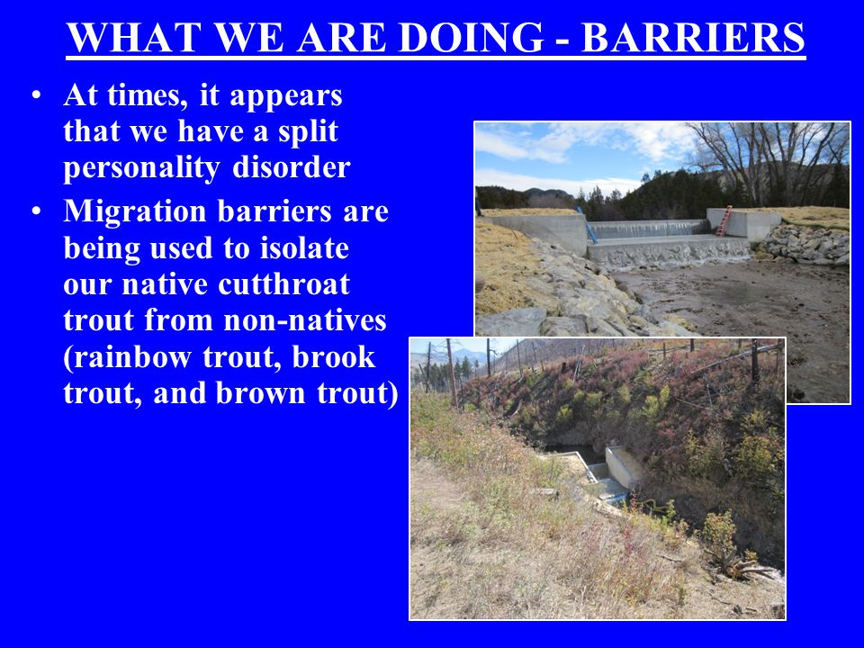 WHAT WE ARE DOING - BARRIERS At times, it appears that we have a split personality disorder Migration barriers are being used to isolate our native cutthroat trout from non-natives (rainbow trout, brook trout, and brown trout)