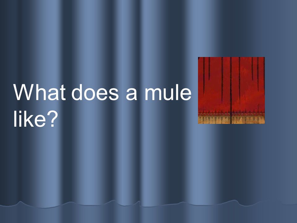 What does a mule sound like?