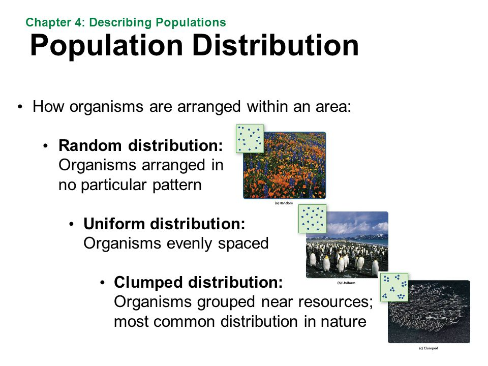 Population Distribution Chapter 4: Describing Populations How organisms are arranged within an area: Random distribution: Organisms arranged in no particular pattern Uniform distribution: Organisms evenly spaced Clumped distribution: Organisms grouped near resources; most common distribution in nature