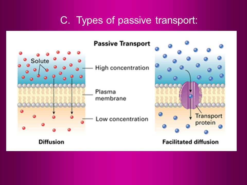 C. Types of passive transport: