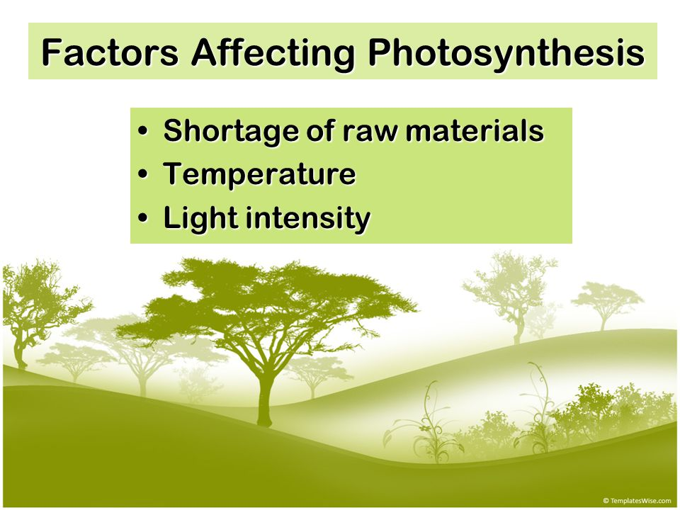 Factors Affecting Photosynthesis Shortage of raw materialsShortage of raw materials TemperatureTemperature Light intensityLight intensity