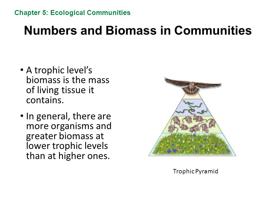 Numbers and Biomass in Communities A trophic level's biomass is the mass of living tissue it contains. In general, there are more organisms and greate