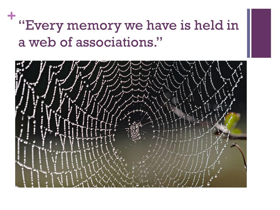 + Retrieval cues Imagine a spider suspended in the middle of her web, held up by the many strands extending outward from her in all directions to different points.
