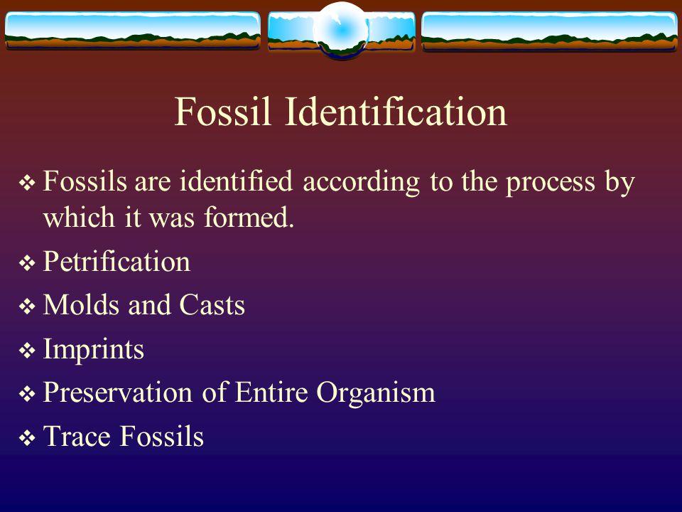 Petrification  Petrification means turning into stone.