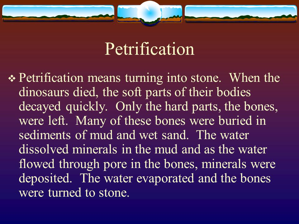 Petrification  Petrification means turning into stone. When the dinosaurs died, the soft parts of their bodies decayed quickly. Only the hard parts,