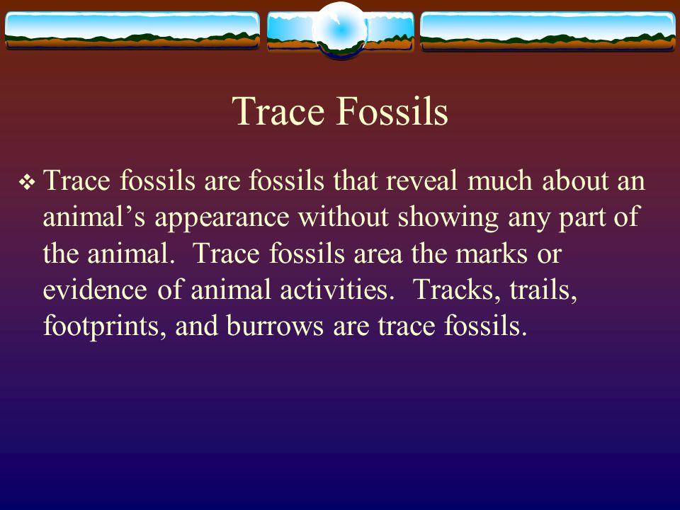 Interpreting Fossils  Fossils indicate that many different life forms have existed at different times throughout the Earth's history.