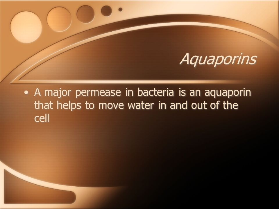 Aquaporins A major permease in bacteria is an aquaporin that helps to move water in and out of the cell