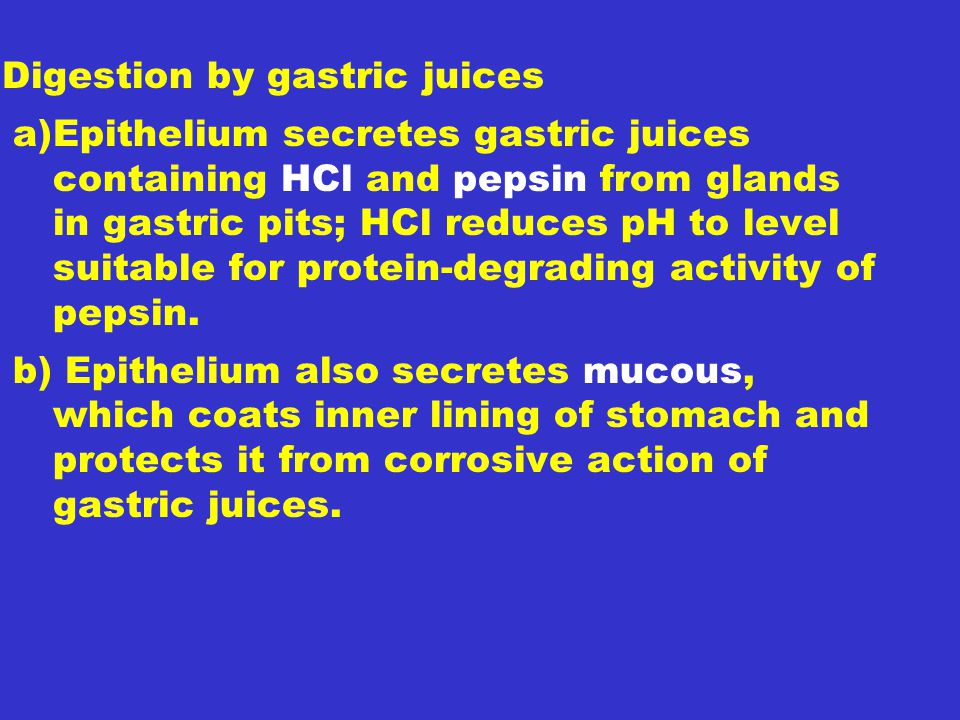 Digestion by gastric juices a)Epithelium secretes gastric juices containing HCl and pepsin from glands in gastric pits; HCl reduces pH to level suitable for protein-degrading activity of pepsin.