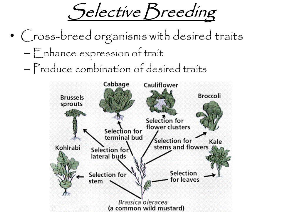 Examples of Genetic Engineering