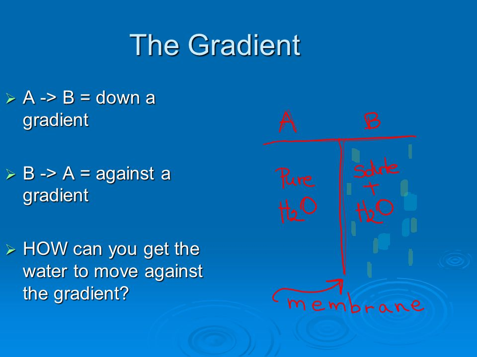 The Gradient  A -> B = down a gradient  B -> A = against a gradient  HOW can you get the water to move against the gradient?