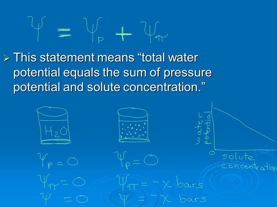" This statement means ""total water potential equals the sum of pressure potential and solute concentration."""