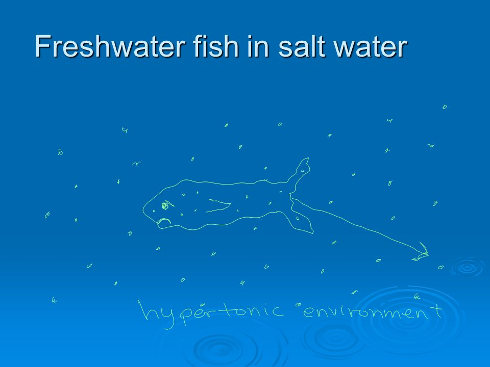 Freshwater fish in salt water