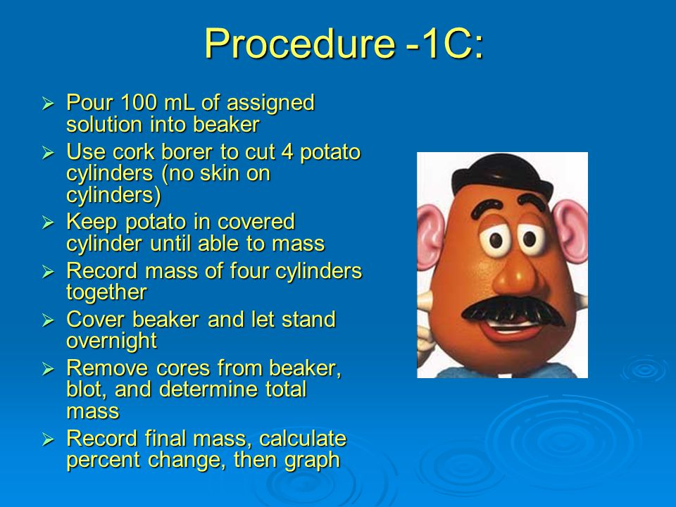 Procedure -1C:  Pour 100 mL of assigned solution into beaker  Use cork borer to cut 4 potato cylinders (no skin on cylinders)  Keep potato in covered cylinder until able to mass  Record mass of four cylinders together  Cover beaker and let stand overnight  Remove cores from beaker, blot, and determine total mass  Record final mass, calculate percent change, then graph