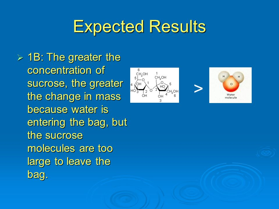 Expected Results  1B: The greater the concentration of sucrose, the greater the change in mass because water is entering the bag, but the sucrose mol