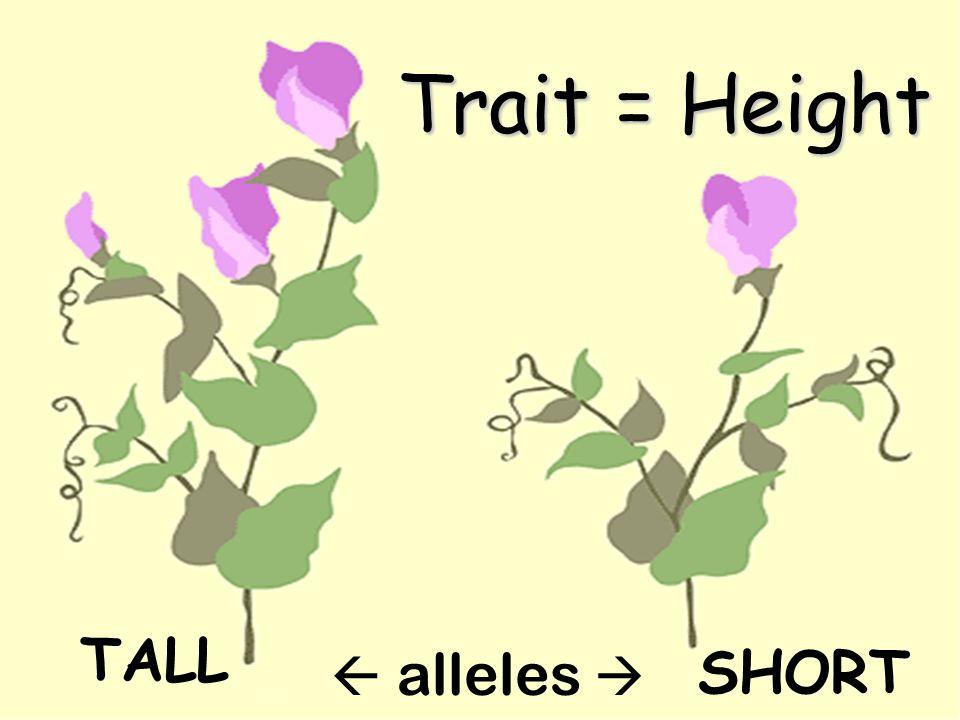 Trait = Height TALL SHORT  alleles 