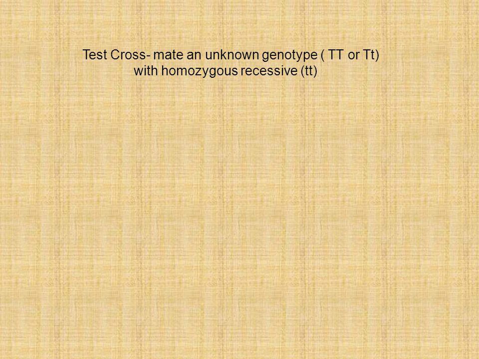 Test Cross- mate an unknown genotype ( TT or Tt) with homozygous recessive (tt)
